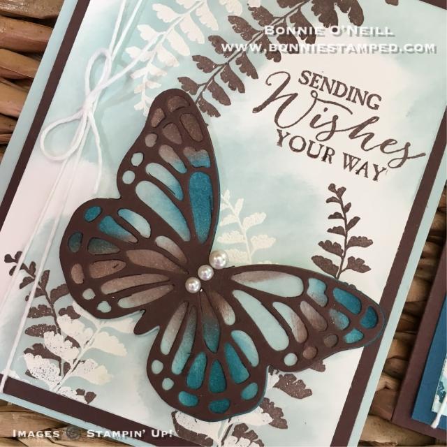 #butterflybasics #boldbutterfly #butterfliesthinlits